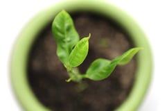Plante verte dans le bac de fleur Image libre de droits