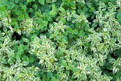 Plante verte dans le jardin Images libres de droits