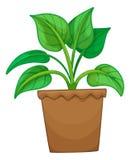 Plante verte dans le pot illustration stock