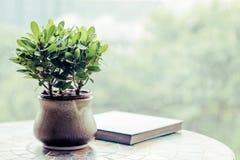 Plante verte dans le pot sur la table Photographie stock libre de droits