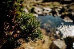 Plante verte dans les montagnes Photographie stock