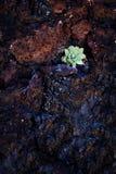Plante verte dans les roches Image libre de droits
