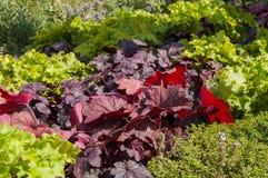 Plante verte dans un jardin Photo stock
