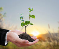 Plante verte dans une main Photographie stock libre de droits