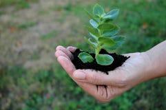 Plante verte dans une paume de woman?s Photo stock