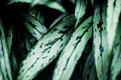 Plante verte discr?te photo stock