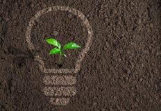 Plante verte en silhouette d'ampoule sur le sol image libre de droits