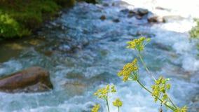 Plante verte et herbe grandissant près de la rivière débordante dans la fin de forêt d'été banque de vidéos