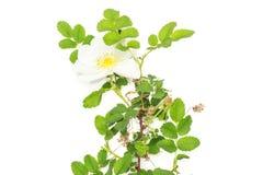 Plante verte fraîche d'isolement sur le blanc photos libres de droits