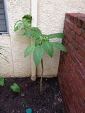 Plante verte inconnue Image stock