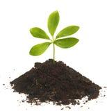 plante verte petite Photographie stock libre de droits