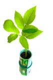 Plante verte s'élevant de l'euro argent Photo stock