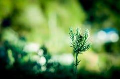 Plante verte s'élevant de la saleté sur la prise de masse Images stock