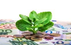 Plante verte s'élevant sur des billets de banque et des pièces de monnaie d'euro Image libre de droits