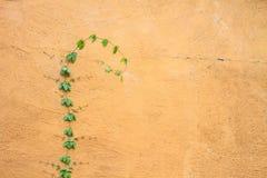 Plante verte s'élevant sur un mur de briques Images libres de droits