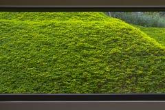 Plante verte s'élevante en dehors de l'hublot énorme photos stock