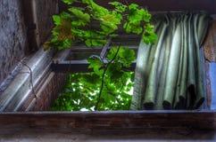 Plante vivante Images stock