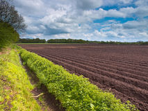 Planted acre Royalty Free Stock Photography