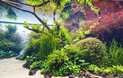 Free Planted Aquarium Stock Photography - 98693422