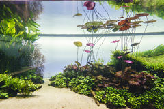 Planted aquarium Royalty Free Stock Photo