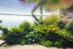 Planted aquarium Royalty Free Stock Photography