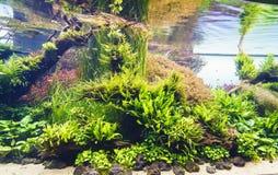 Planted aquarium. Nature freshwater aquarium in Takasi Amano style of Lisbon, Portugal, Europe Photo taken on: February 17, 2016 royalty free stock image