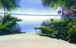 Planted aquarium. Nature freshwater aquarium in Takasi Amano style of Lisbon, Portugal, Europe Photo taken on: February 17, 2016 stock photo