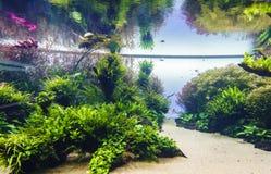 Planted aquarium. Nature freshwater aquarium in Takasi Amano style of Lisbon, Portugal, Europe Photo taken on: February 17, 2016 stock photos
