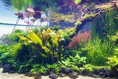 Planted aquarium. Nature freshwater aquarium in Takasi Amano style of Lisbon, Portugal, Europe Photo taken on: February 17, 2016 royalty free stock photos