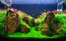 A planted aquarium with rocks Royalty Free Stock Photography