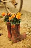 Planted boots. Royalty Free Stock Image