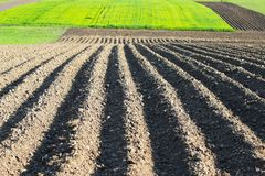 Planted farmer field. Agriculture farming nature landscape Royalty Free Stock Images