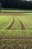 Planted Field. Newly planted crops growing in a field with the curved tractor plow lines running off into the distance Stock Photos