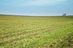 Planted field Royalty Free Stock Image