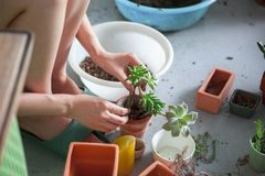 Planted flowers,greenhouse, planted succulents foliage plants, stock photo