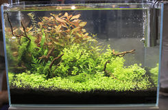 Planted  Freshwater Aquarium Royalty Free Stock Photography