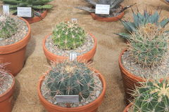 Planted group of small cacti in Gothenburg botanical garden, cactus, plants, desert, succulent Royalty Free Stock Photo