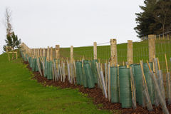 Planted hedge. A newly planted hedge with stakes and tree guards stock photo