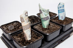 Planted Polish money Royalty Free Stock Photography
