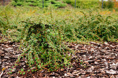 Planted shrub Stock Photos