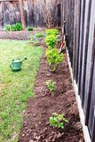Planted and watered bushes of currants and raspberries Stock Image