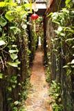 Planten-straat royalty-vrije stock foto