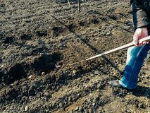Plantend aardappels in rijen in de grond Royalty-vrije Stock Fotografie