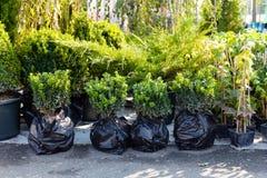 Plantenkwekerijinstallatie in pot voor verkoop Marktcentrum royalty-vrije stock foto