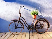 Planter. An antique bicycle with a planter on it Stock Photo