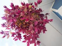 planter Stock Afbeelding