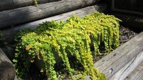Planter binnen logboeken Royalty-vrije Stock Foto