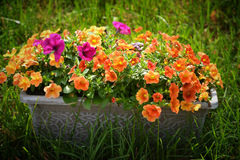 Planter box of flowers Stock Image