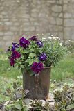 Planter with flowers Royalty Free Stock Image