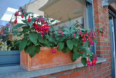 Planter with Fuchsia flowers. A stone planter with beautiful Fuchsia flowers on the windowsill stock images